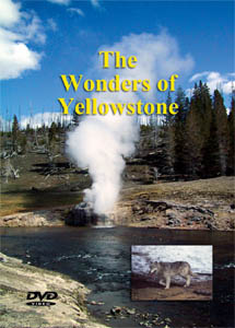 yellowstone dvd